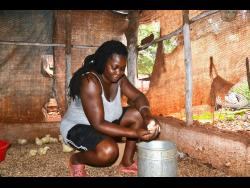 Laverne Dixon, a chicken farmer from Cherry district in St Catherine.