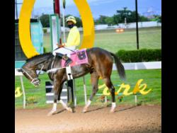 """TREVOR'S CHOICE with Oshane Nugent aboard heads to the Winners Enclosure after winning the Christopher """"Chris"""" Armond Sprint Trophy, the 11th race at Caymanas Park on Sunday, December 27, 2020."""