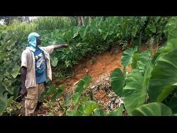 Garnett Poyser shows how a landslide destroyed some of his crops.