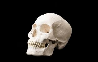 An image of a human skull.