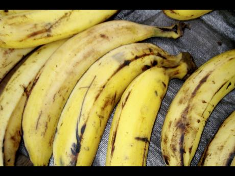 Di curious case of di plantains | Commentary | Jamaica Star