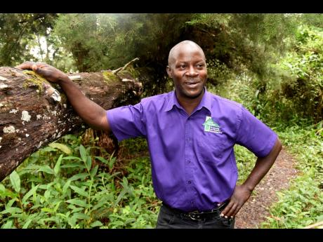 Johnson patrols the park on a daily basis making sure the different trees and birds are protected.Johnson patrols the park on a daily basis making sure the different trees and birds are protected.Johnson patrols the park on a daily basis making sure the different trees and birds are protected.