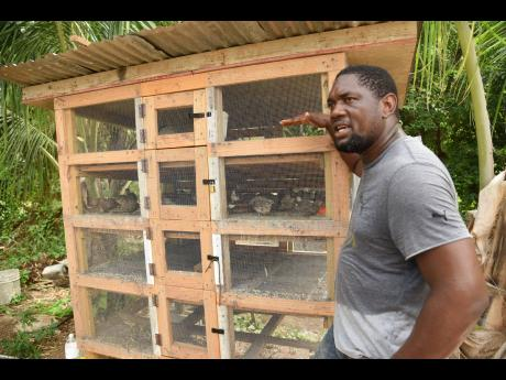 Gavin Myers stands beside a bird cage that houses quails at Rocksprings Farm in Rockfort, Kingston.